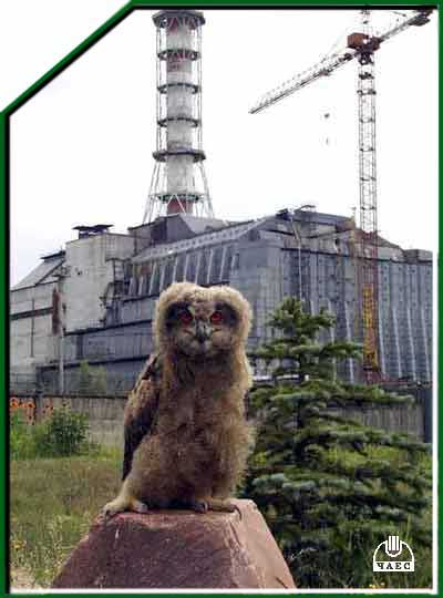 Animals Found At Chernobyl With Deformities Greenreading